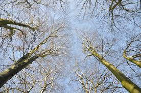 Snoeigereedschap voor bomen
