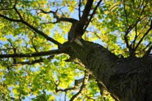 bomen er uit zien