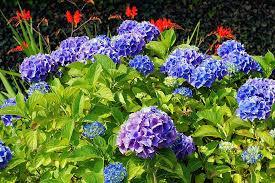 wanneer buxus snoeien voorjaar