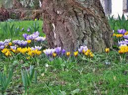 Snoeien in de lente bloemen onder een boom