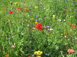 Snoeien in de zomer veldbloemen